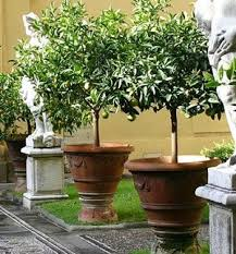 Many trees, shrubs and perennials will grow well in containers, providing  an interesting focal