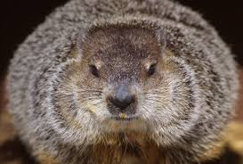 「the first Groundhog Day」の画像検索結果