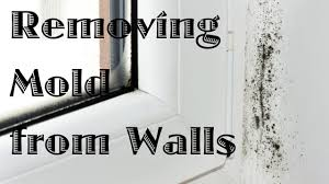 Best Bath Decor best bathroom cleaner for mold and mildew : Removing Mold from Walls - YouTube