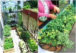 apartment gardening ideas balcony vegetable garden ideas best apartment gardening ideas on plants patio container vegetable