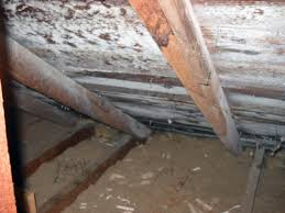 mold mitigation cost. Plain Mitigation How Is Mold Removal Cost Determined Inside Mitigation D