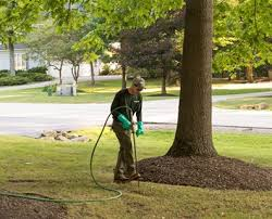 What When And Why The Best Way To Fertilize Trees Davey Blog