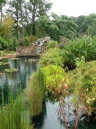 coastal georgia botanical gardens water garden