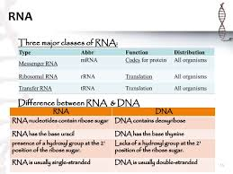 Similarities And Differences Between Mrna And Trna Chart B Tech Biotechnology Ii Elements Of Biotechnology Unit 2