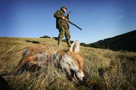 Risultati immagini per teresa may caccia alla volpe