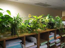 plants for office cubicle. Plants For Cubicle Chronicles Indoor The Office Desktop Meeting Place Decorate By Dream