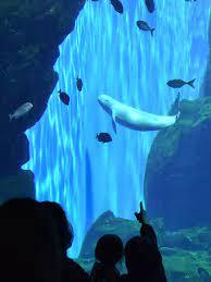 仙台 うみ の 杜 水族館