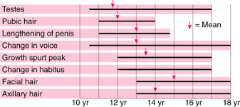 Stages Of Puberty In Males Chart Physical Growth And Sexual Maturation Of Adolescents