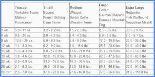 Pomeranian Puppy Feeding Chart Australian Shepherd Puppy Growth Chart Goldenacresdogs Com