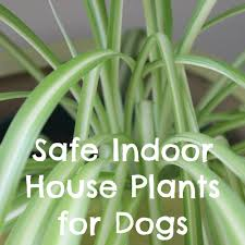 Remarkable Dogs Plus House Plants in Indoor House Plants