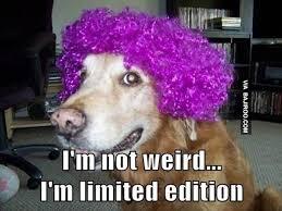 funny-limited-edition-dog-meme – Bajiroo.com via Relatably.com