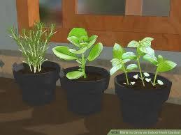 indoor herb gardens. image titled grow an indoor herb garden step 1 gardens