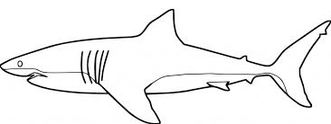 Small Picture Shark Coloring Pages To Print Miakenasnet