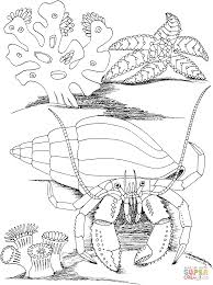 Small Picture Hermit Crab and Star Fish coloring page Free Printable Coloring