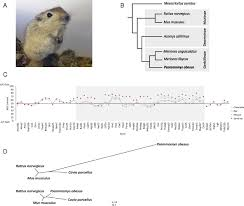 Rodents Lower Classifications Genome Sequence Of A Diabetes Prone Rodent Reveals A