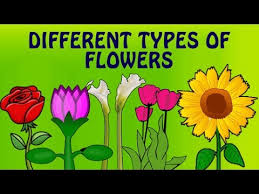 learn english flower names with pictures diffe types of flowers pre learning videos