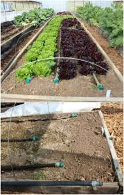garden irrigation system. Delighful System Dual System DIY Irrigation And Garden O