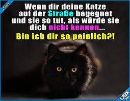 Shiny On Twitter Katzen Können So Gemein Sein Xx Httpstco