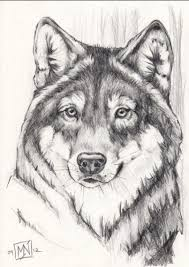 gray wolf face drawing. Exellent Drawing Wish I Could Draw Like This For Gray Wolf Face Drawing A