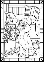 16 Beste Afbeeldingen Van Honden Dagopvang Dog Daycare Doggies En