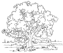 Small Picture Nature coloring pages shady tree ColoringStar