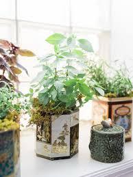 Indoor Kitchen Gardening Garden Landscaping Unique Ceramic Pots Designs For Indoor