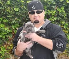 testimonials pit bull puppies ers
