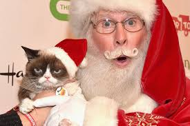 grumpy cat christmas hat. Perfect Grumpy Grumpy Cat Seems To Have Dominated 2015u0027s Hollywood Christmas Parade And Hat C