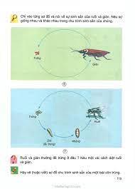 SGK Khoa Học 5 - Bài 56. Sự sinh sản của côn trùng