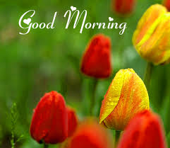 1854 good morning images pics hd for