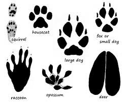 Free Animal Paw Print Download Free Clip Art Free Clip Art