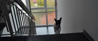 Auf vier pfoten die treppen auf und ab: Welpen Und Treppen Ab Wann Durfen Welpen Treppen Steigen