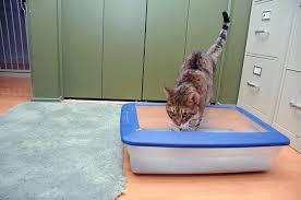 senior cat litter box. Delighful Litter Litter Box Happiness U2013 For Cats Of All Ages Inside Senior Cat