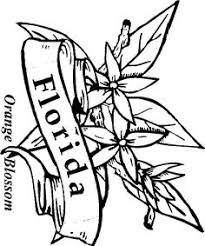 Small Picture State Flower Coloring Pages Connecticut State Flower Coloring Page