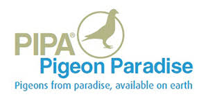 Znalezione obrazy dla zapytania logo PIPA