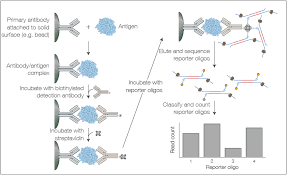 Multiplexed Quantification Of Protein Panels By Nanopore