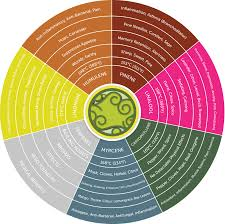 Terpenes And Cannabis Blog Philosopher Seeds