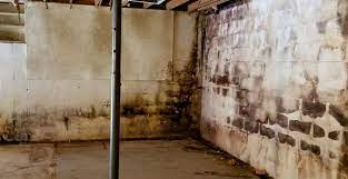 how to remove mold from basement walls
