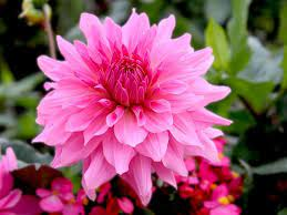 pink flowers with names and pictures
