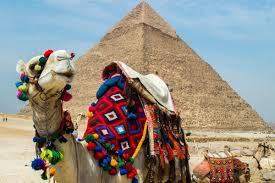 Pyramids At Giza Camels Beware The Scam Egypt wIH6vv