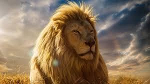 lion king 4k hd jpg