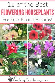 grow beautiful blooming houseplants in planters or hanging baskets all year long with this fun list