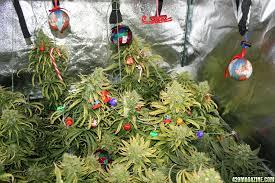 Happy Holidays - Merry Xmas!