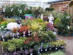 outdoor plants kemps garden centre bristol