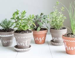 Kitchen Herbs Garden Why Are My Herbs Dying Common Kitchen Herb Garden Mistakes
