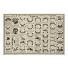 Age Of Horse By Teeth Chart Anatomy Poster
