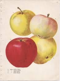 List Of Apple Cultivars Wikipedia