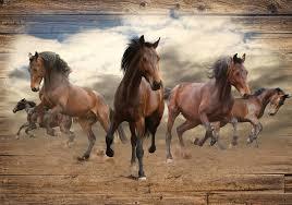 Paarden Fotobehang 10083p8 Fotobehangkoopjesnl