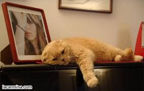 cute kittens sleeping on pianos. Fine Cute FAT CAT SLEEPING ON PIANO CLASSICAL MUSIC LOVING PET KITTENS BABY TIGER  LION CUB With Cute Kittens Sleeping On Pianos S