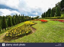pine tree garden flower and garden on hill with pine trees for landscape plateau on mountain background kasad tee sung phurua loei agr